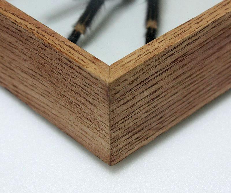 Przykład bejcowania i faktury drewna gablotki dębowej.