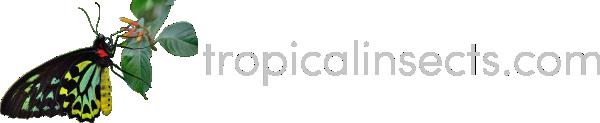 tropicalinsects.com – Sklep Entomologiczny – Owady i pajęczaki z całego świata